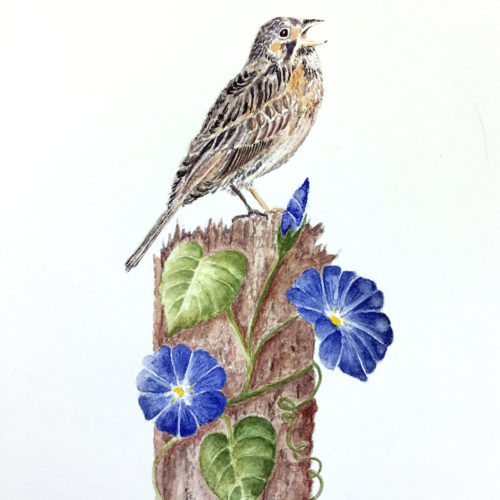 Jan Boyd Botanicals - Bird