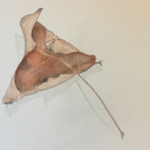 Jan Boyd Botanicals - Dried Leaf
