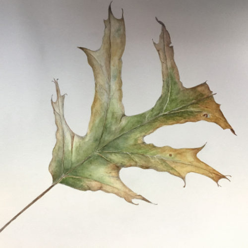Jan Boyd Botanicals - Fall Leaf