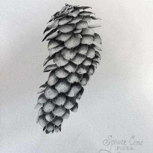 Jan Boyd Botanicals - Pine Cone